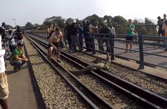 Tren raylarına giren timsah korku dolu anlar yaşattı!