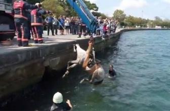 Sarıyer'de hareketli dakikalar! Denize düşen at böyle kurtarıldı