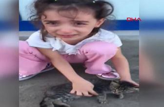 Minik Fatmanur'un yaralı kedi üzüntüsü izlenme rekorları kırıyor