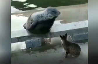 Kedi, fok balığını böyle dövdü