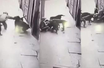 Sokak köpekleri, kendilerini seven adamı paramparça etti!