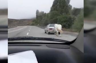 Erzurum'da 'pes' dedirten görüntü! Atı böyle götürdü