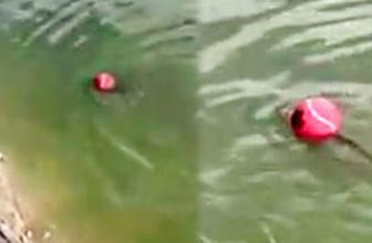 Suya düşen topu sahibine geri getiren balık