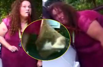 İstanbul'da kedileri toplayan gizemli kadından dehşete düşüren sözler!
