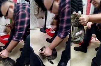 İş adamı kediyi sopayla dövdü: Dehşet anları kamerada!