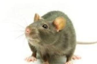 Penisini fare ısıran tutuklu, yetkililere dava açacak