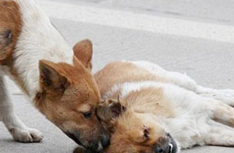 Dünya bu iki köpeği konuşuyor!
