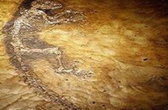 55 Milyon yaşında fosil bulundu
