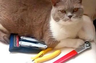'Trafodaki kedi' için suç duyurusu!