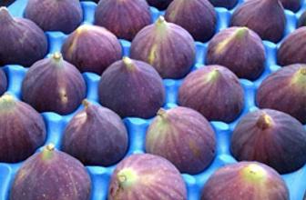 Bursa siyah inciri ihracatta  atağa kalktı
