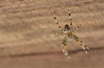 Örümcek ipliği mücizesi