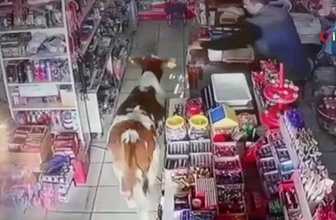 Dana markete girdi, market sahibi neye uğradığını şaşırdı