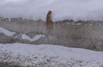 Kedinin karla imtihanı! Tırmanmak için uğraştı ama başarılı olamadı
