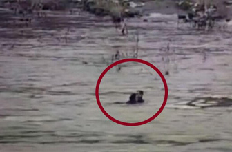 Şırnak'ta polis intihar etmek için nehre atlayan kadını kurtardı
