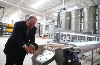 Sanayi ve Teknoloji Bakanı Mustafa Varank açıkladı Siirt fıstığı dünyaya açılıyor