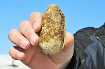Muş'ta 11 milyon yıllık fosiller bulundu
