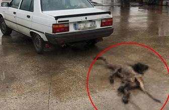 Edirne'de köpeği otomobilin arkasında sürükleyen sürücüye 1552 TL ceza