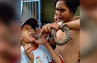 Şoke eden görüntü! Oynadıkları yılan çocuğun dilini soktu