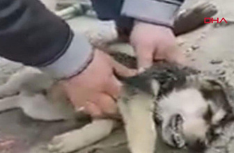 Kalp masajı ve suni teneffüs yaptığı köpeği hayata döndürdü