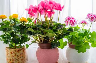 Çiçeklerin yaprakları neden eğilir işte toprak sulama yöntemi