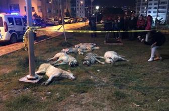 Ankara'da köpekleri zehirleyen 3 kişi gözaltında! Mansur Yavaş talimat vermişti