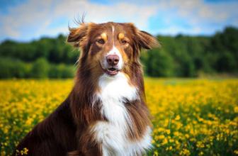 Köpekler sakallı erkeklerden daha temiz çıktı