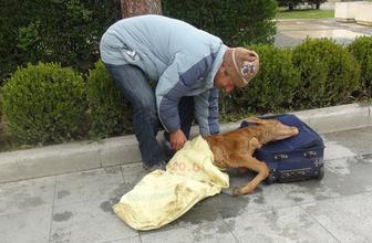 Buzağıyı valizle getirip valilik önüne bıraktı köylünün iddiası şaşırttı