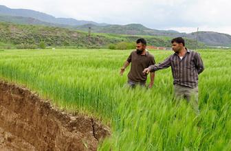 Siirt'te buğday tarlasında ürküten görüntü gece vakti oldu