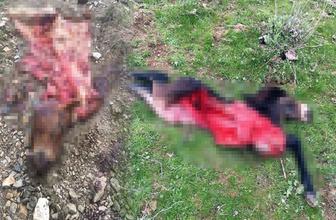 Manisa'da vahşet! Atları öldürüp parçalara ayırdılar