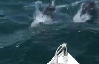 İzmir'de renkli görüntüler! Yunuslar balıkçı teknesiyle yarıştı