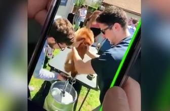Vicdansızlar! Üniversite kulübünün partisinde 10 aylık köpeğe zorla bira içirdiler