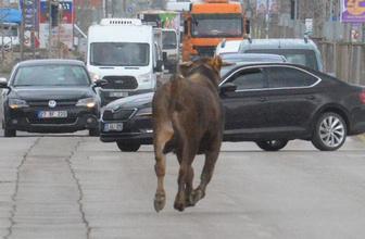 Erzurum'u birbirine katan olay! Saatlerce peşinden koştular ama...