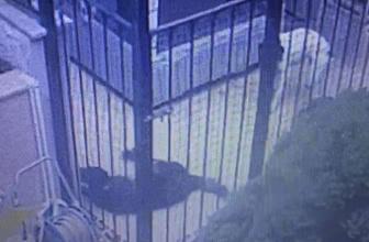 Sarıyer'de salyangoz zehri dehşeti: 1 köpek telef oldu