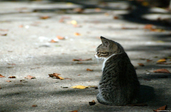 Sahipli kediyi yere vurarak öldürmüştü cezası belli oldu