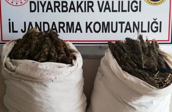 Diyarbakır Hazro'da 47 kilo esrar ele geçirildi