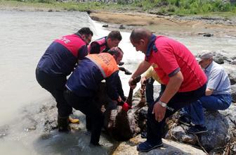 Zonguldak'ta eşek çaya düştü itfaiyeciler kurtardı
