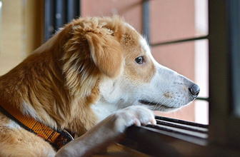Bilim adamlarından köpeklerle ilgili şaşırtıcı araştırma! Meğer sonradan ortaya çıkmış