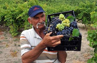 Türkiye'nin ilk üzüm hasadı Tarsus'ta yapıldı
