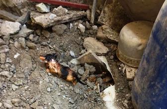 Vatandaşlar haber verdi! Kanalizasyona sıkışan yavru kediyi itfaiye kurtardı