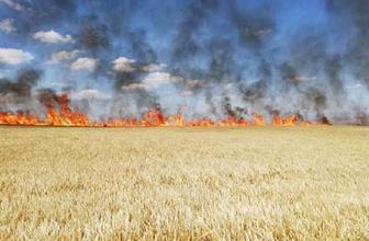 Aksaray'da 300 dönüm tarım arazisi yandı