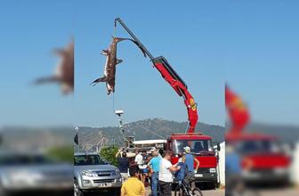 Muğla Fethiye'de 400'er kiloluk 2 köpek balığı yakalandı