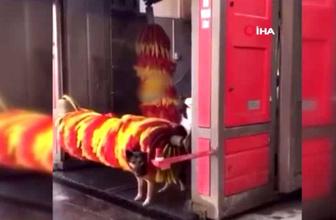 Antalya'da köpeklerin fırçalı ve buzdolaplı serinliği