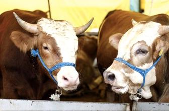 Kurbanlıkların sakatatları yenir mi nasıl hangi hayvanın sakatatı yenir?