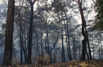 Dalaman'da son yılların en büyük yangını! Yürek sızlatan tablo gün ağarınca ortaya çıktı