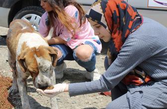 Merhametin böylesi! Genç kız sokak hayvanlarını beslemek için her gün aç gezdi