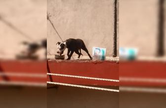 Antalya'da sıcaktan ölen köpeğin sahibine 7 bin 802 lira ceza