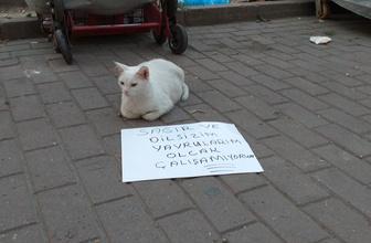 Bursa'da dilenci kedi görenleri şaşırttı