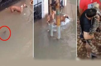 Sel sularıyla şehre inen timsah köpeğe işte böyle saldırdı