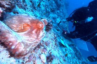 Antalya'da dünyanın en eski batığı bulundu! Çalışmalar başladı tam 3 bin 600 yıllık