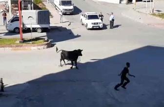 Zonguldak'ta kaçan boğa ortalığı birbirine kattı
